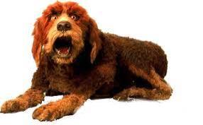 Weekly Muppet Wednesdays: Dog   The Muppet         Mindset